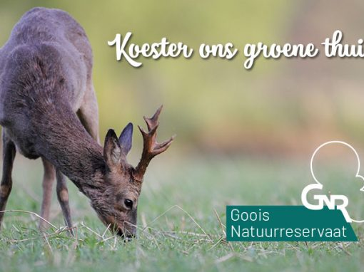 'Goois Natuurreservaat' by WWAV